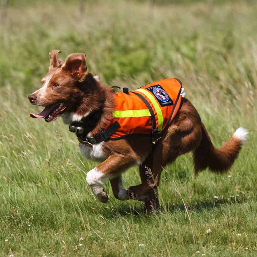 Search Dog Ben